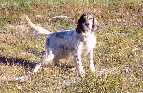 Tarifs Éducation canine - Dressage de chiens - Agility