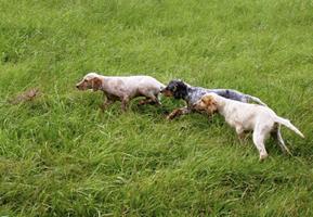 Dressage de chiens d'arrêt - Éducation canine - Le clos du